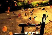 Otoño/Autumn
