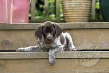 PupPup