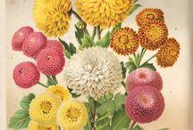 Illustrazione botaniques / Bouquet