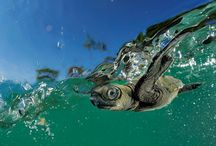 Turtle Tuesday! / Try to be like the Turtle, at ease in your own shell