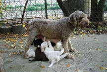 Dogs / Cani <3