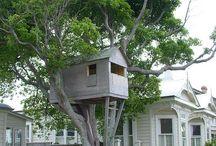 Tree House Daydreams  / by Kim Padua Badger