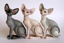 i love... sphynx cats...