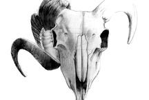 xs draws / stuff i drew