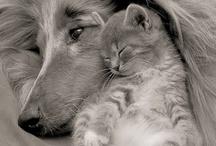 Кошки и собаки / animals