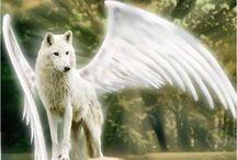 волки и другие животные
