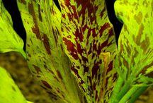 Akva plants