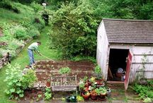 in the garden / Garden inspiration
