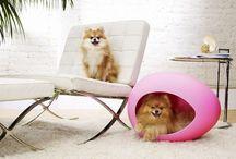 Cute Animal Ideas