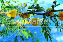 Nature & Landscapes - Royalty Free Photos / A collection of nature and landscape royalty free photos, images and vector illustrations that can be found on SnapMarket