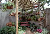 Orchid house ideas