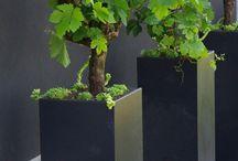 Wijnstokkengarden
