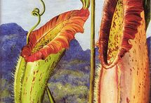 Marianne North