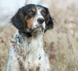 Remington the mighty  dog