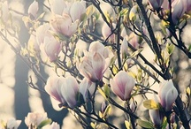 Spring day ...