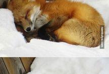 Brilliant Animals