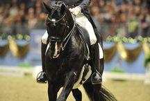 Equestrian  / by Derrick DeCristofaro
