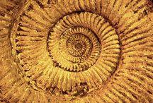 Fossils & shells
