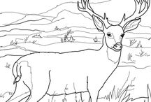 Coloring pages other Animals