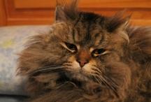 My cat / by pedro castellanos