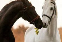 Лошади любовь