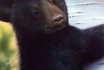 Медведи:)
