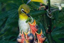 Birds / by Maureen Strachan