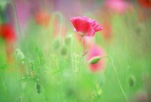 Fresh Flowers / by Christine Craig