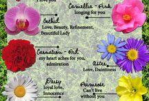 Flower meanings / flower meaning mostly