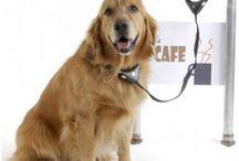 Dyrenes sikkerhed