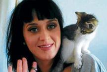 Gatos con famosos