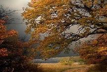 Inspiration automne