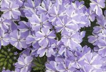 New Plants for 2018 / Our picks for the best of what will be new in the garden centers and seed catalogs for 2018. Companion to our article in the Jan/Feb 2018 issue of The American Gardener where you can read reviews of plants by test gardeners, and see the national prize winners.