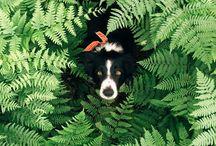 Border Collie | Find Momo