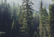 Wood/Mountain/Forest/Calm