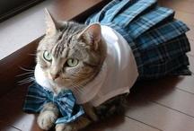 cat / 可愛い猫