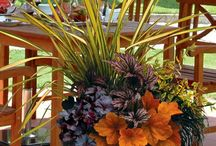 Container Garden / by Barbara Dickmeyer Erlendson
