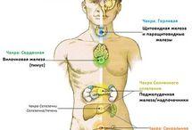 Body Secrets / Чакры, анатомия, нади