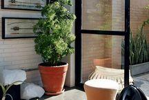 plantas maiores para interior da casa.