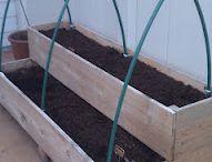 Gardening and Backyard