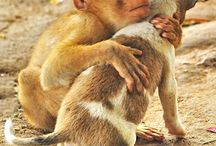 Hugs / Hugs make me smile, whether they are animals, humans or whatever!