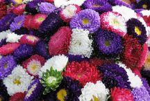 Blomsterbuketter och arrangemang