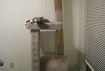 Animals CATS / pets