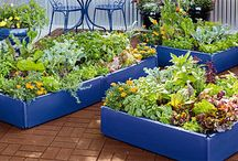 Vegetable Gardening / by Melissa Rice Cox