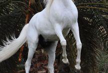 Horses named al