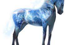 HOWRSE / Moja nástenka je o koňoch ktoré si chovám na svojej stránke :-)