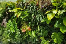 Atmosphy Green Walls / Atmosphy design, install and maintain beautiful plant displays and green walls for offices and homes. Contact info@atmosphy.com.au for more information #officedesign #officedecor #officeideas #greenwall #indoorplants #interiordesign #gardendesign #verticalgarden #verticalgardenwalls www.atmosphy.com.au