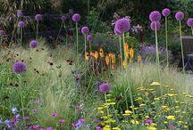 Záhrady / gardens