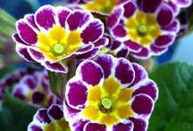Purples & Yellows