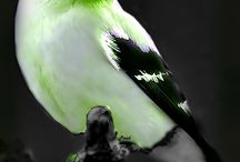 Bijzondere vogels